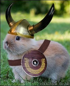 Viking Helmet on rabbit
